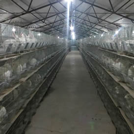 肉兔养殖污水处理