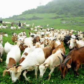 养羊污水处理工程